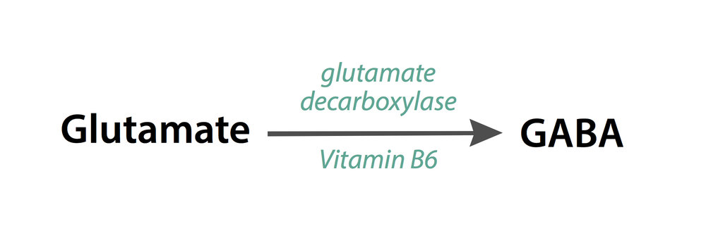 Glutamate decarboxylation reaction