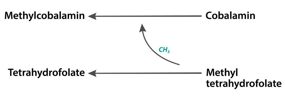 cobalamin-methycobalamin