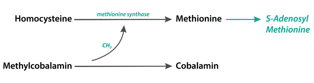 homocysteine-methionine