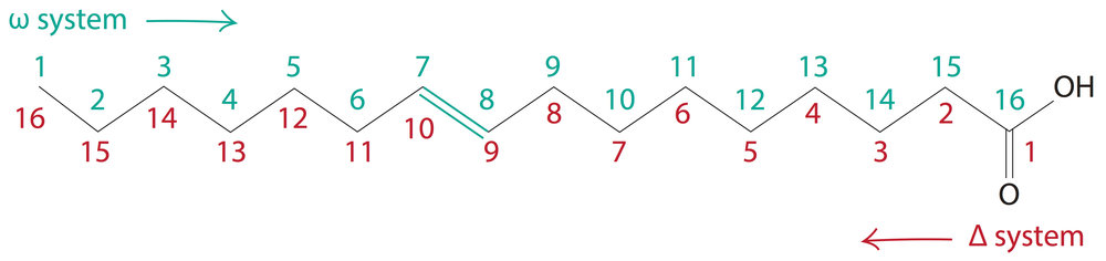 Fatty Acids The Building Blocks Of Lipids Firstclass