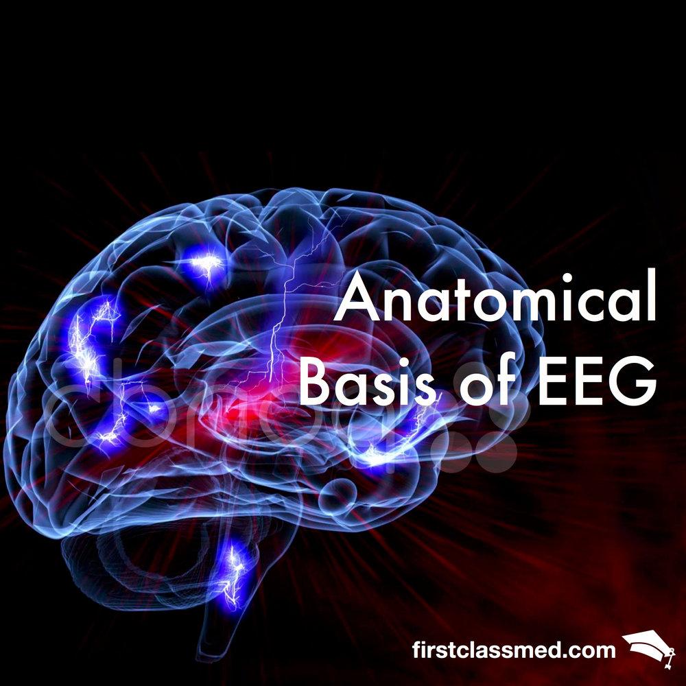 Anatomical basis of an EEG — Firstclass