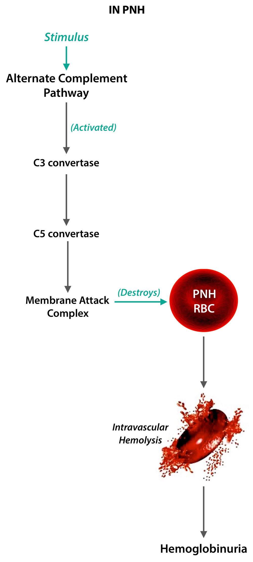 RBC-in-PNH