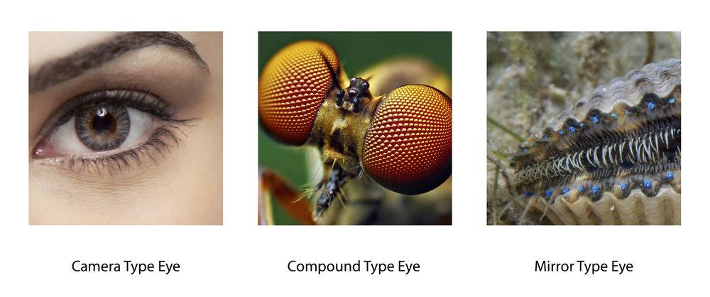 types of eyes.jpg
