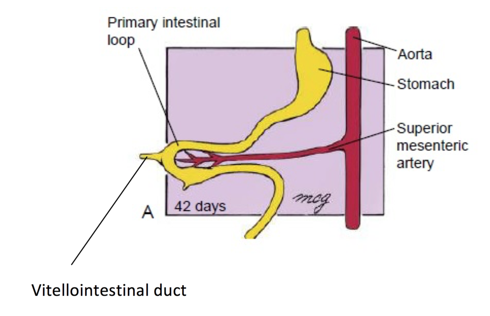 Gut-rotation-image-2