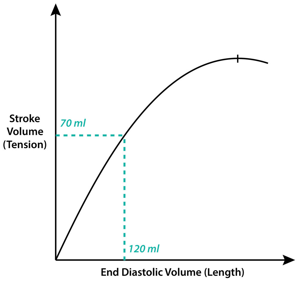 Normal stroke volume: 70-80ml Normal EDV: 120-130ml