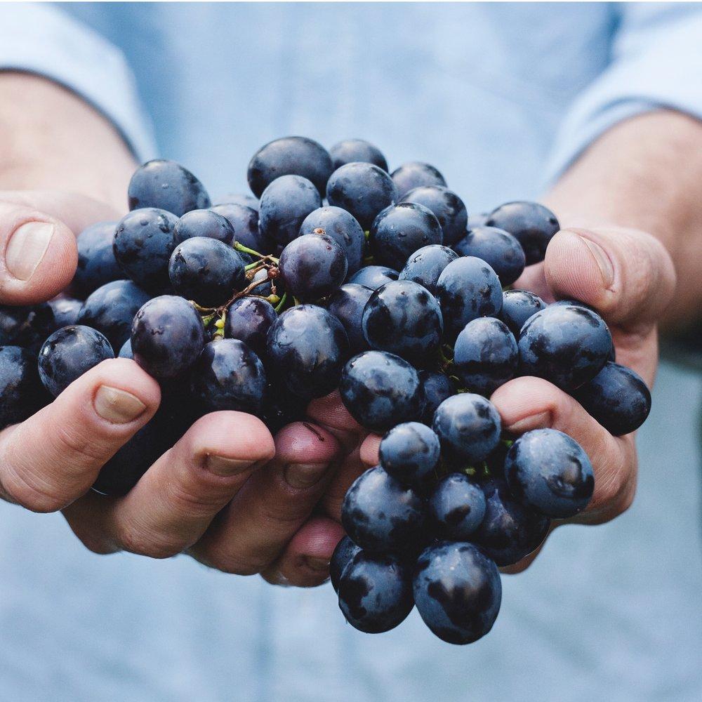 tuscany-wine-resize2.jpg