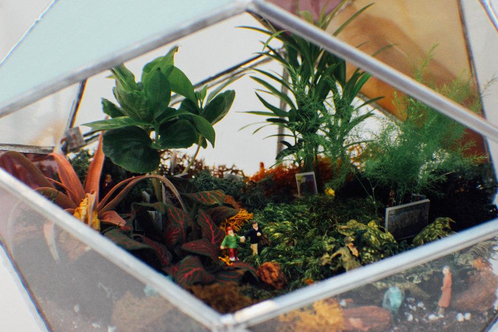 terrarium-3.jpg