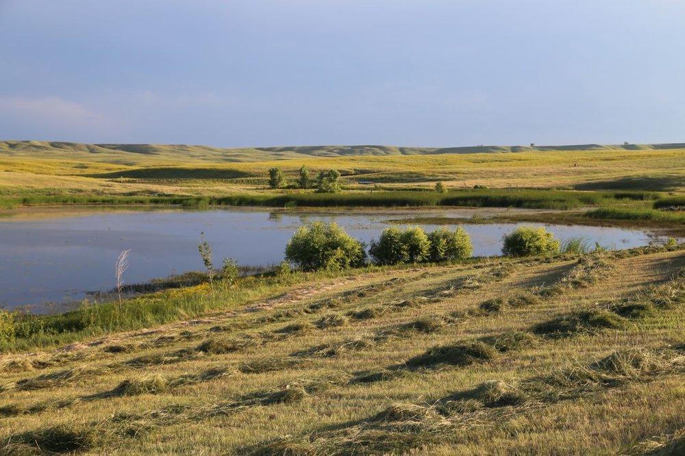 Field Art -