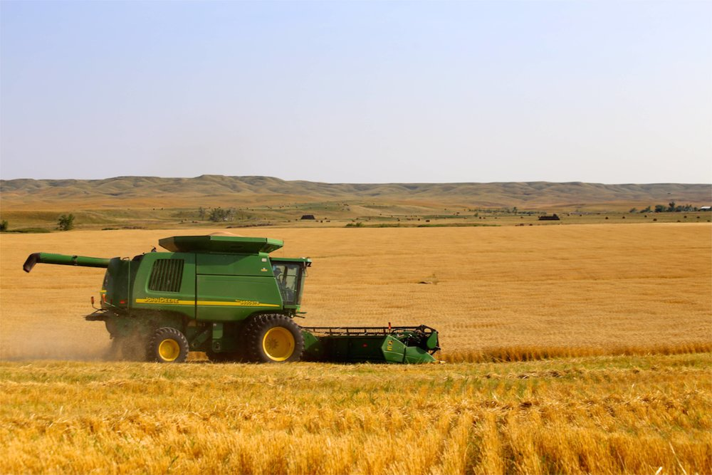 Wheat Harvest -