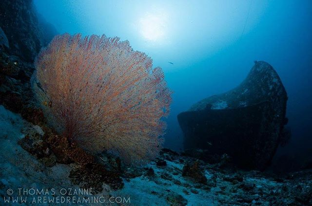 Fan coral and Wreck at 40m in Similan National Park, Phang Nga, Thailand.