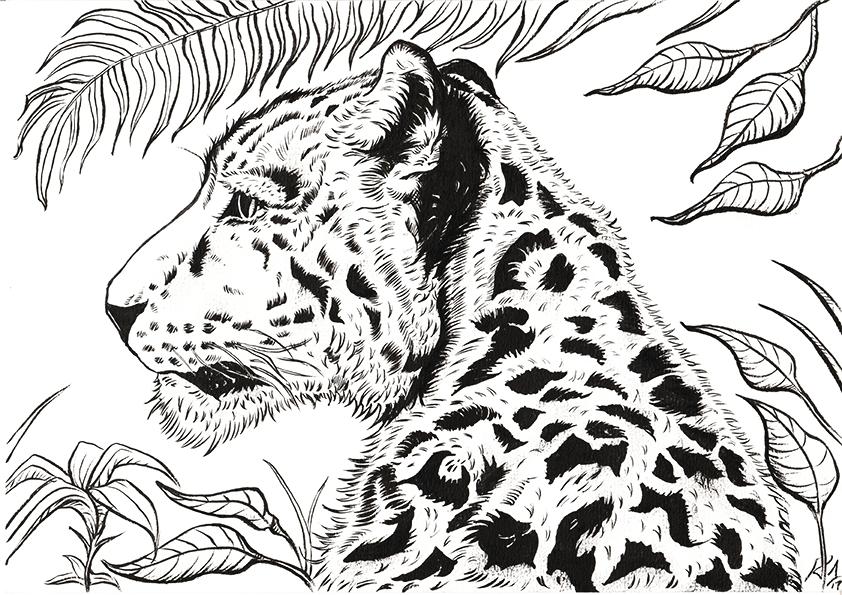 'Wild Cat'