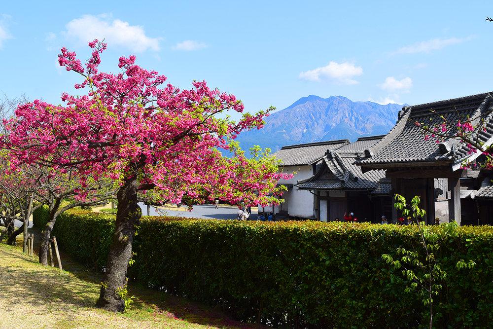 Kagoshima Gardens - robbieallenart.jpg
