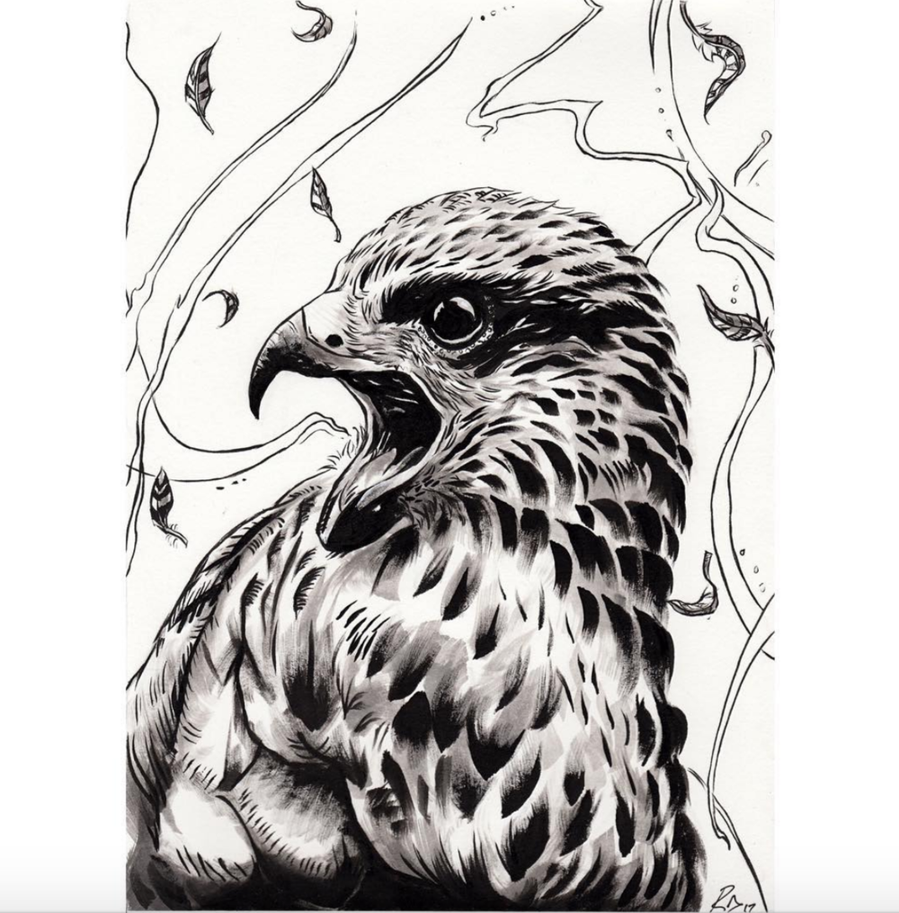 Above image; 'Call of The Hawk' My ink illustration/drawing on paper for the Inktober challenge.