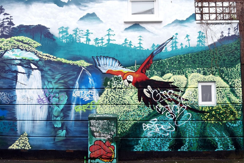 Above image;    Tropical/rainforest street art close to my house.