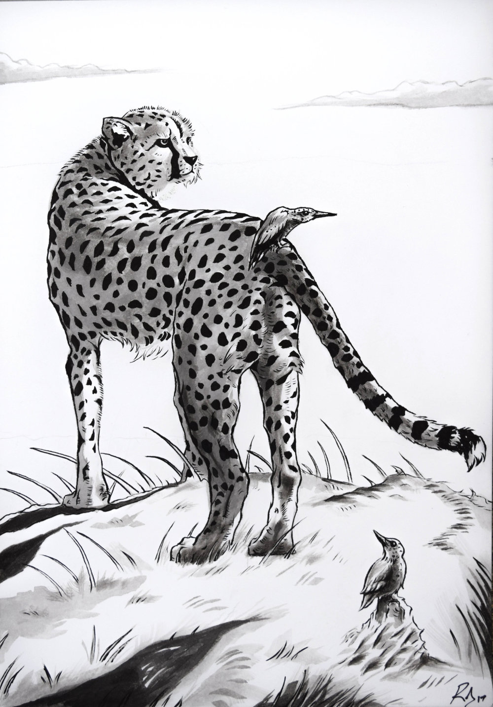 'The Cheetah & The Kingfisher'