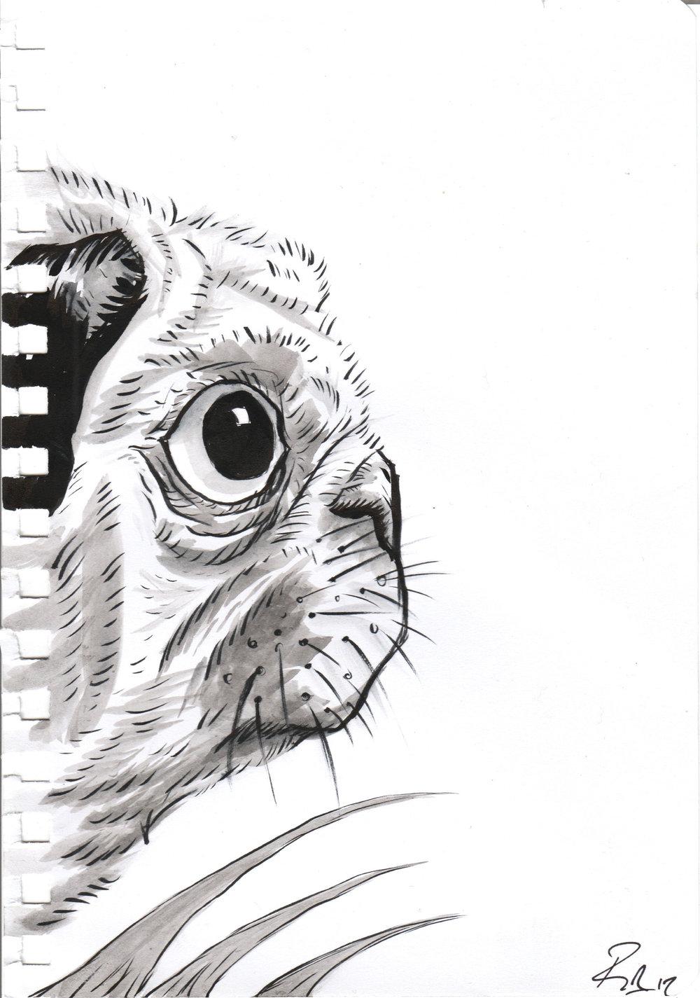 'The Shy Pug'