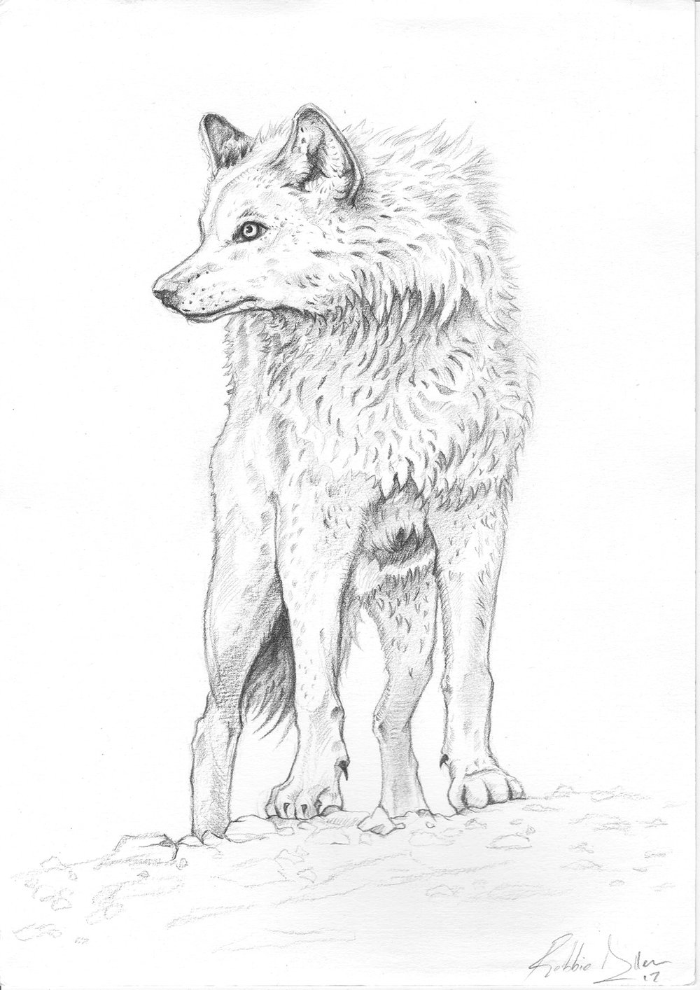 'Call Of The Wolf'