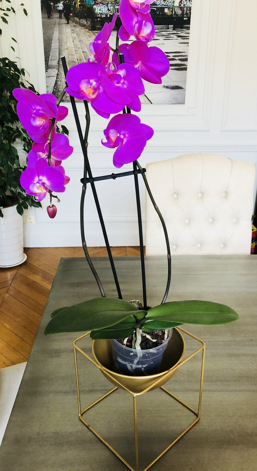 Example of how you can plant an orchid