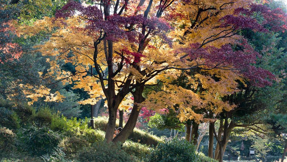 Arisugawa Park | lovers