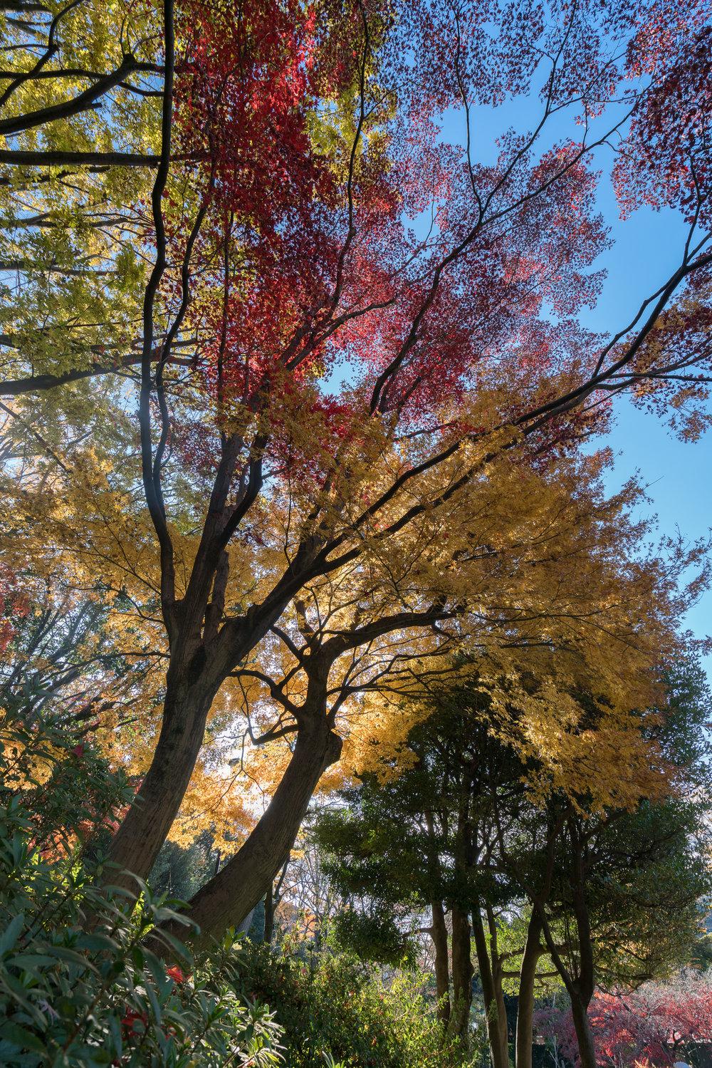 Tokyo | Arisugawa Park