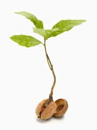 Seed growing pic.jpg