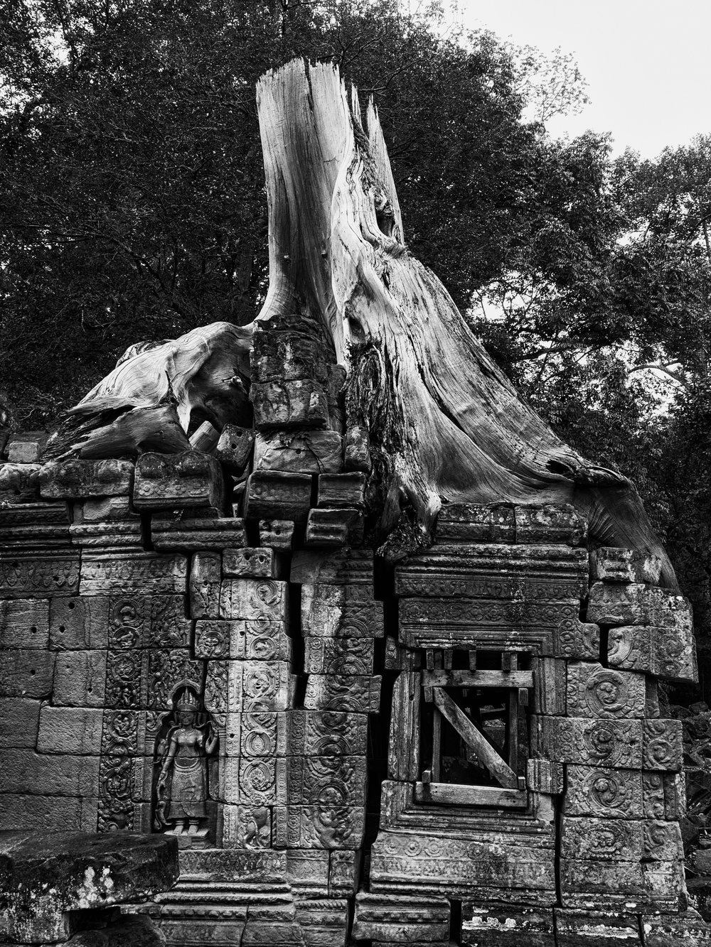 Musings by the Glass - Visual Musings - Tree Overgrown at Angkor Wat