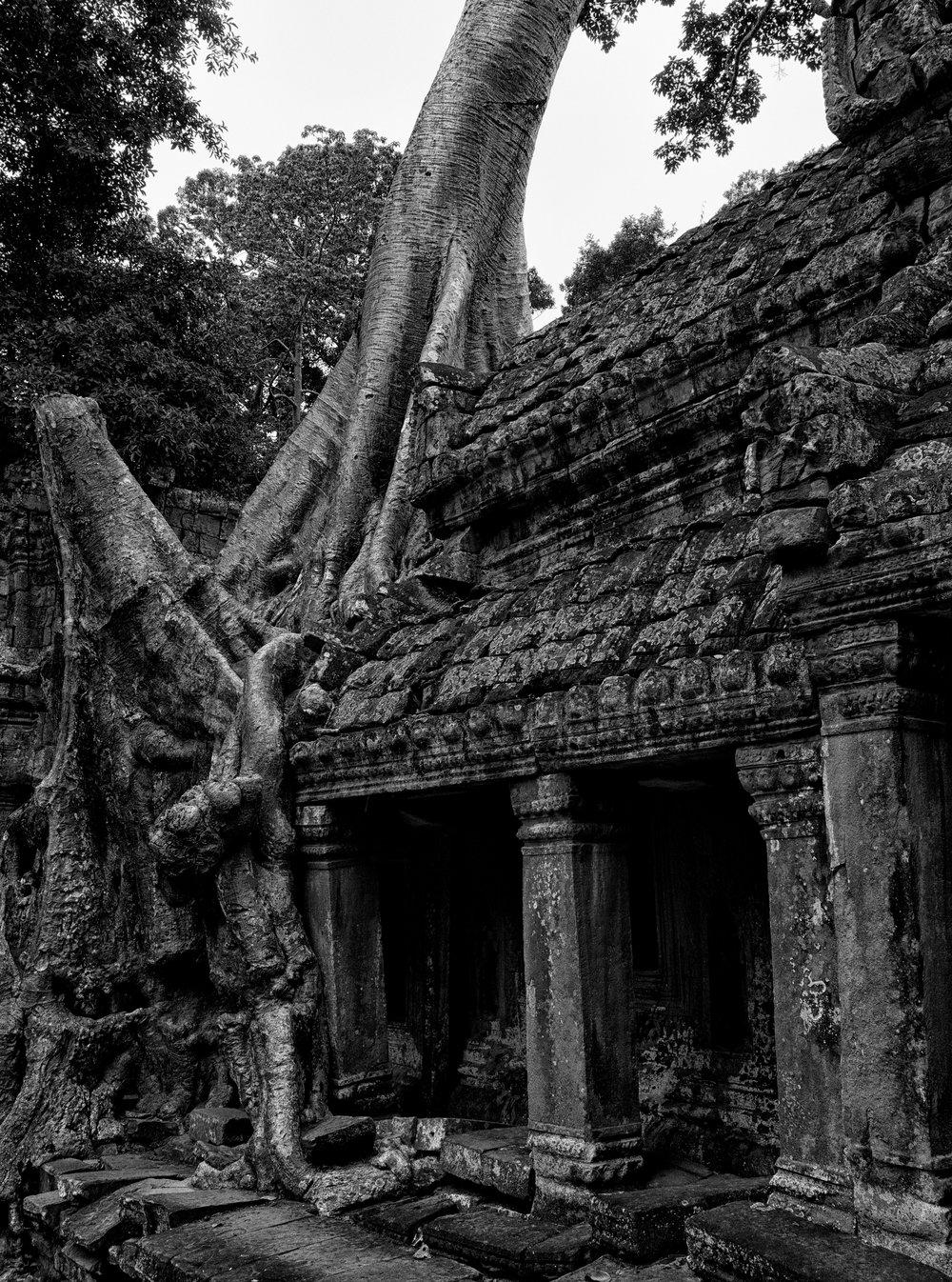 Musings by the Glass - Visual Musings - Tree Overgrown Angkor Wat