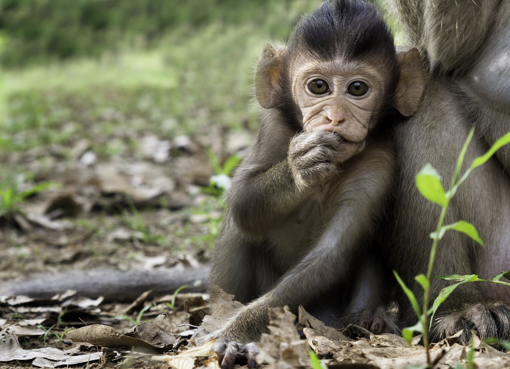 Musings by the Glass - Visual Musings - Baby Monkey Enjoys Home in Angkor Wat