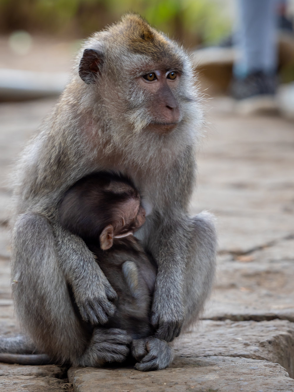 Musings by the Glass - Balinese Road Less Traveled - Monkey