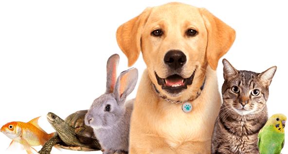 dog-cat-rabbit-bird-turtle-fish.jpg