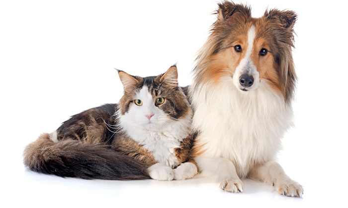 cat dog.jpg