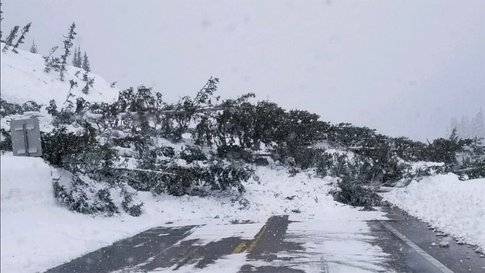 Fallen Trees - Hwy 550 - CDOT