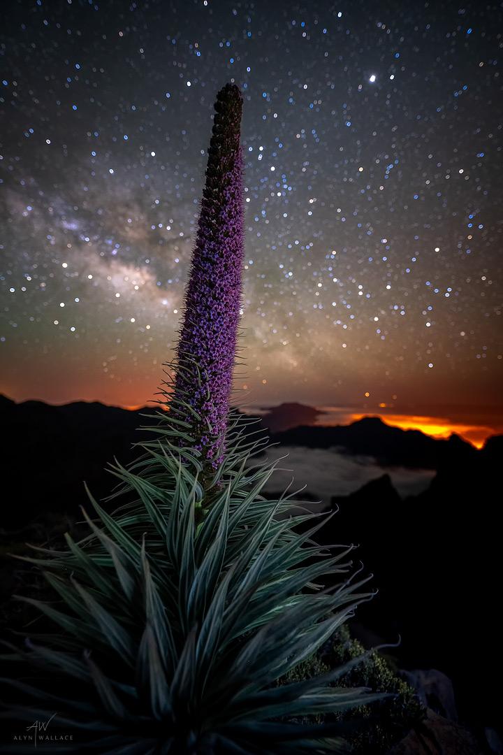 Tajinaste-Milky-Way-La-Palma.jpg