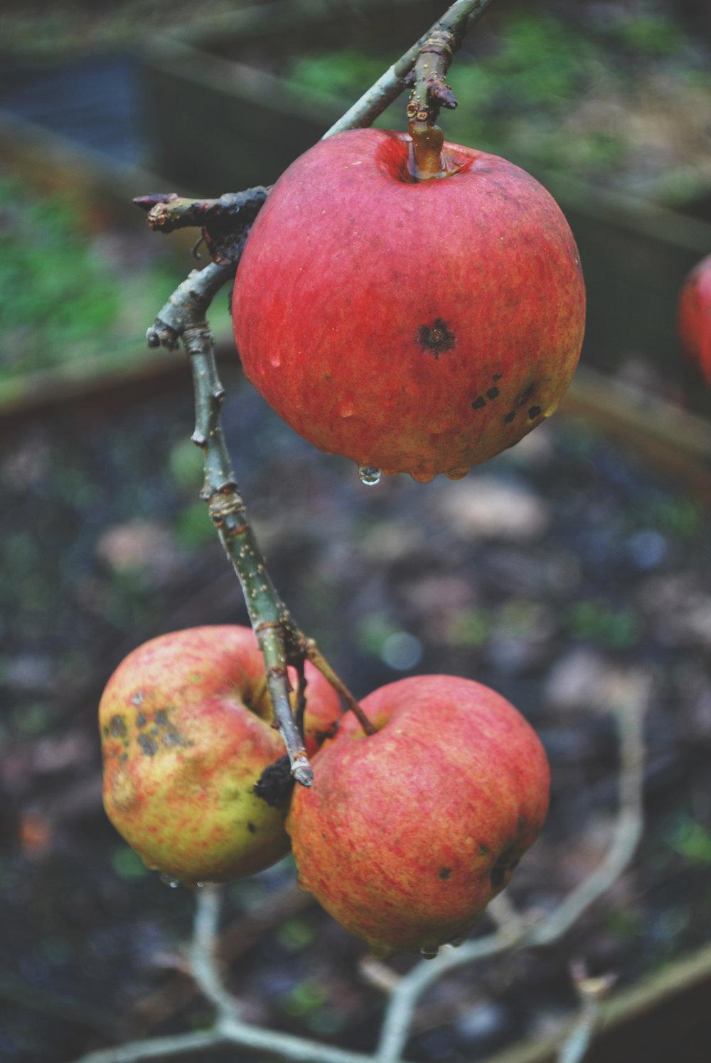 Applesfd.jpg