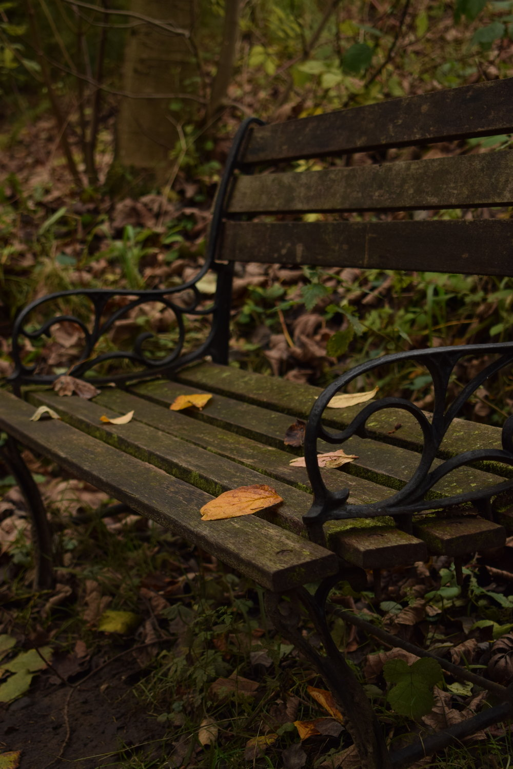 Autumn bench.JPG