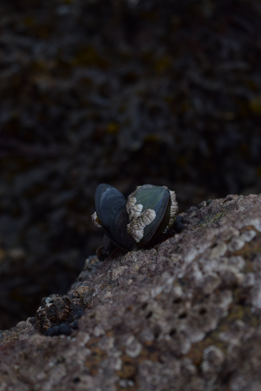 Luib clams.JPG