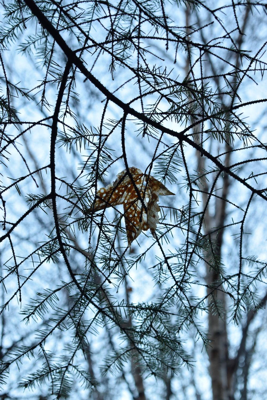 spotted leaf.JPG
