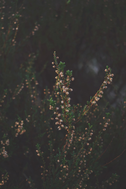 heather sepia2.jpg