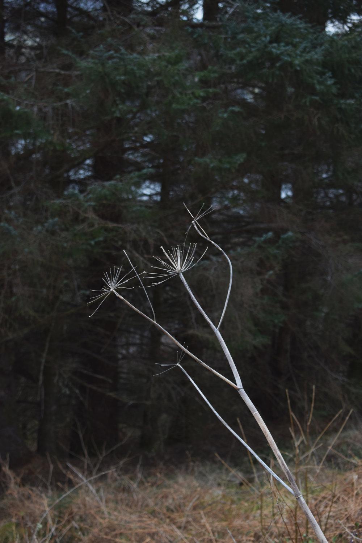 stalk.jpg