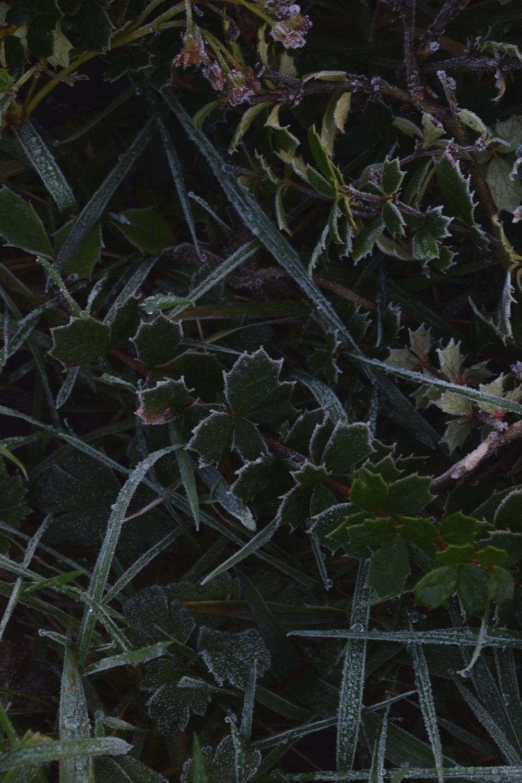 frostr.jpg