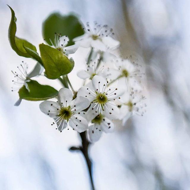 Just because I love flowers and nature. #popupweddingco