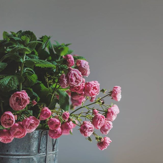 Wild mint and vintage roses. What an amazing combination of sent.