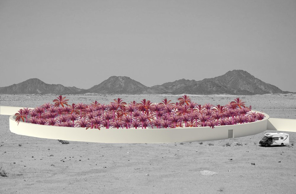 Palmeraie  / palm garden