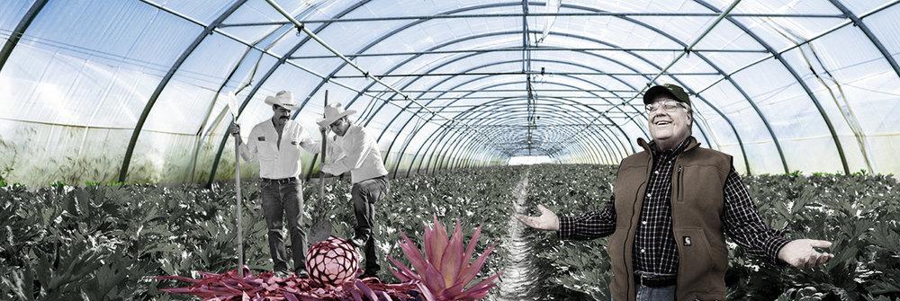 Incubateur d'agriculture  / agriculture incubator