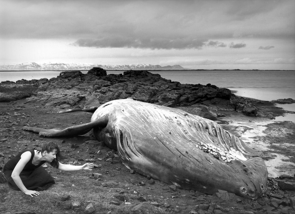 Self Portrait, Beached Humpback Whale, Heraðsandur, Iceland