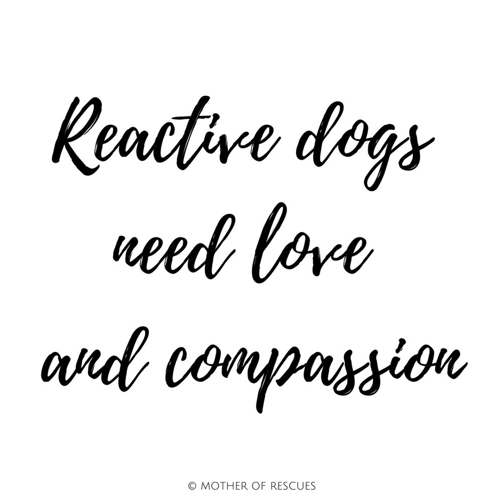 reactive-dog-love-compassion