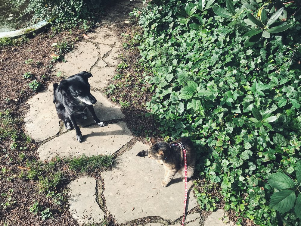 Shadow-Bailey-walkies.JPG