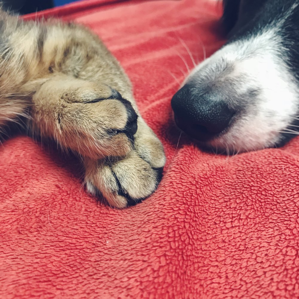 kitten paws + puppy snouts