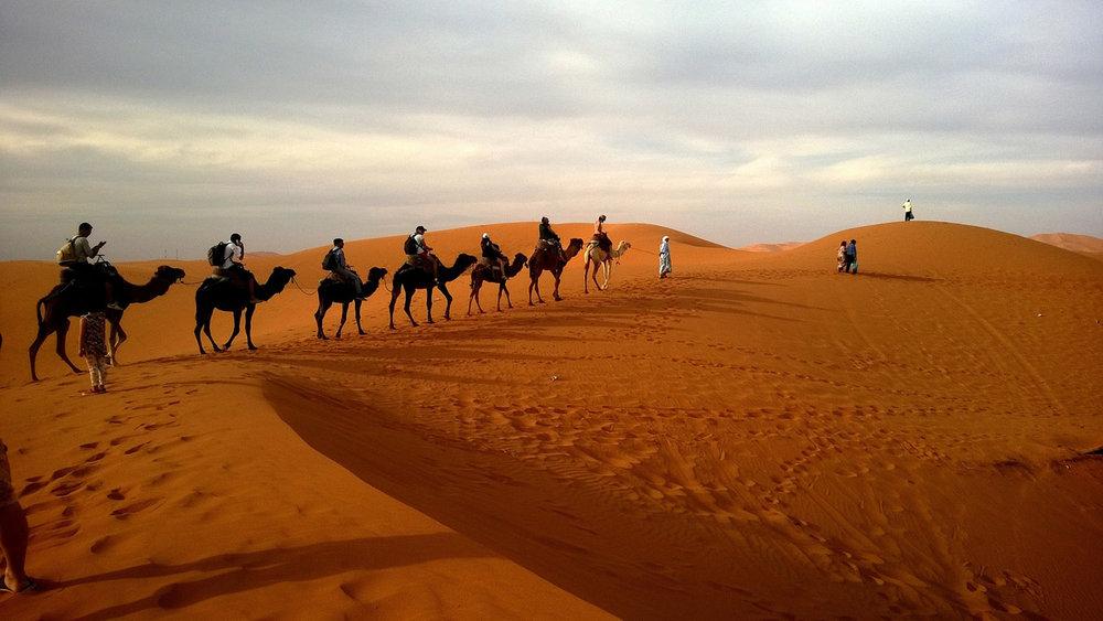 Camel Caravan in Moracco