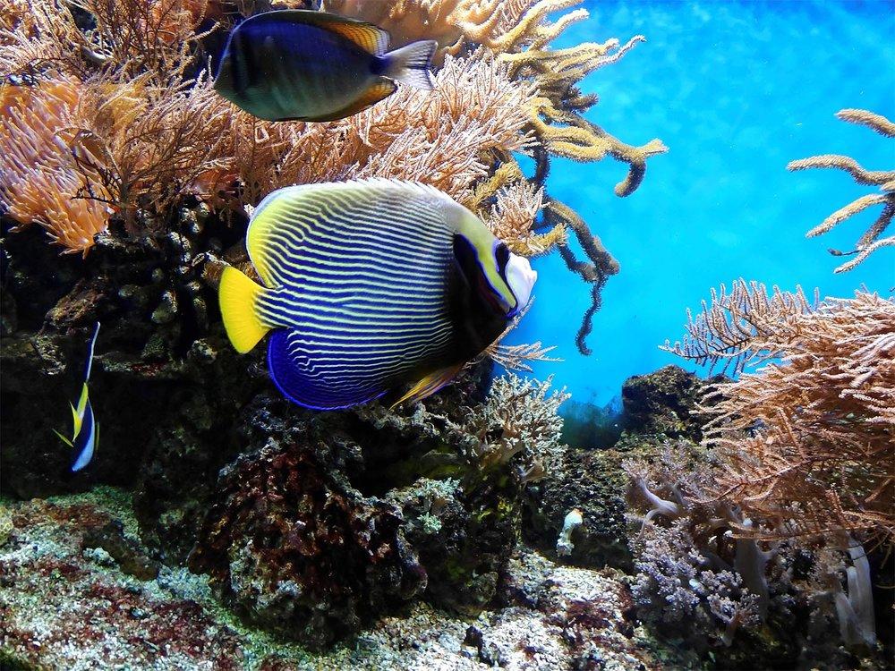 coral-1355479_1920-sm.jpg